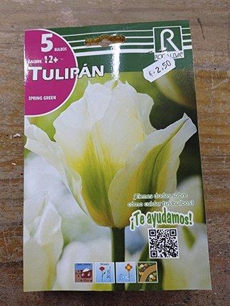Tulipán primavera verde 5 bulbos, Rocalba, bulbos para plantar.
